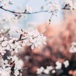 Η αισθηματική αστρολογική συμβουλή της εβδομάδας 23 ως 29/4/2018.